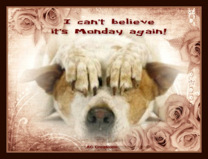 can't believe it's Monday again!