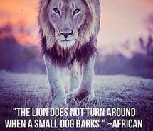 don't care, independence, lion, pride, quote, small dog, strength ...