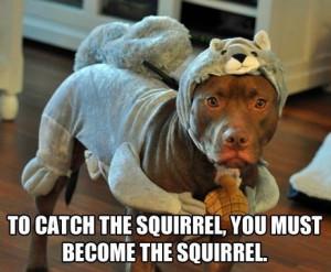 Funny pitbull meme