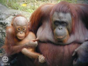 cute monkey pics, cute animated monkeys, cute monkeys for sale, cute ...