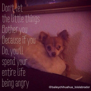Chihuahua quote; don't bother!