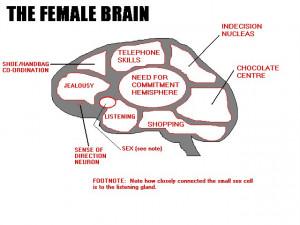 Female Brain Deciphered – Visual Graphic Representation