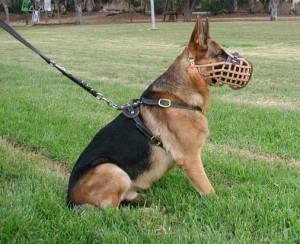 German Shepherd Leather Dog Muzzle - Muzzle Fighting For Police