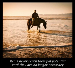 ReinsAnother beautiful picture by @equinoxphoto Tricia Meteer of http ...