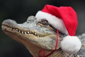 BLOG - Funny Alligator Pics