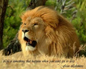 The lion,