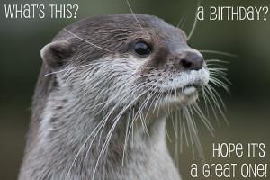 ellismorleyphto › Portfolio › Otter birthday card
