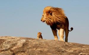 Lion Cub Widescreen Wallpapers