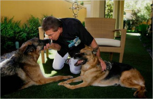 Steve Wynn Pets ( 1 )