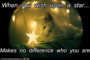 ... You Wish Upon A Star, Makes No Difference Who You Are. ~ Cat Quotes