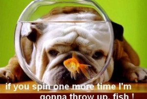 Funny Bulldog And Fish Tank Pics