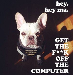 french bulldogs + computers = arch nemeses