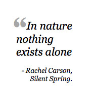 What is Rachel Carson's Legacy? 6 Women Leaders Speak Out On The ...
