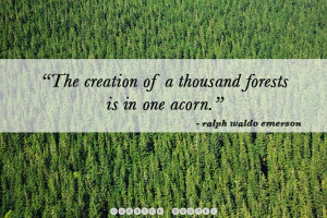 The 40 Most Inspirational Tree Quotes