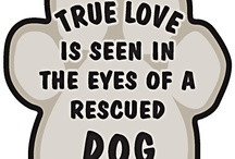 Cute Dog Related Sayings and Quotes / by Genesis Dog Rescue