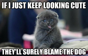 Share This Funny Cat Meme On Facebook!