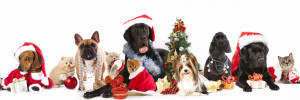 and christmas dog and cat shelter dogs to dream dogs christmas dog and ...
