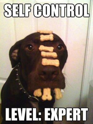 funny dog joke pic ROFL! Funny Joke Pic!