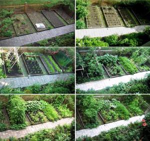 Vegetable Garden Layout Plans Quotes Download Wallpaper Vegetable ...