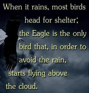 When it rains, most birds head for shelter; the Eagle is the only bird ...