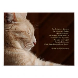 Mourning A Pet Cat Quotes Quotesgram