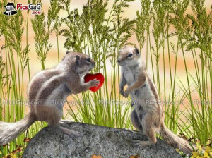 Squirrel love cute funny picture which is very hilarious and this ...