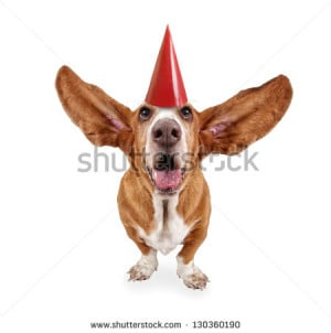 Related Pictures basset hound dog sitting against a white backdrop and ...