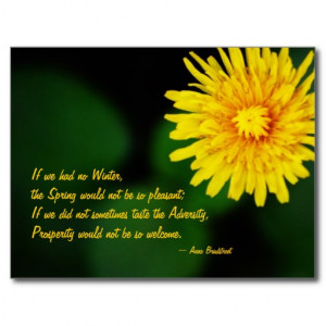 Dandelion Flower Anne Bradstreet Quote Postcard