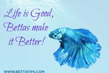 Quotes About Betta Fish