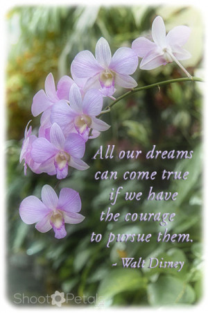 Violet coloured epidendrum orchids with Disney quote To add text