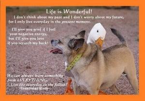 url=http://www.pics22.com/life-is-wonderful-dog-quote/][img] [/img ...