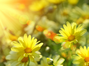 Spring Sabbath