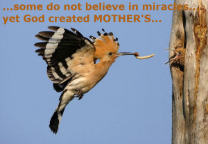 Mothers Day Quotes: Mama Bird Feeding Baby