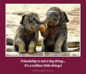 cute-elephant-friends