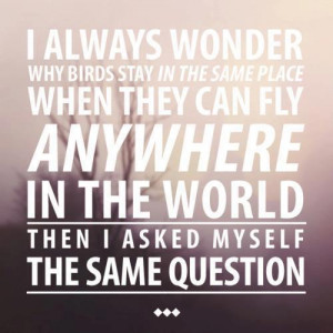 Freedom Quotes About Life I always wonder why birds stay