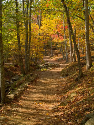 ... to pursue a different path the road not taken to quote robert frost