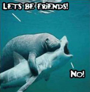 Funny Animals best friends Fashion cool pic gallery news