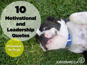 10 Motivational and Leadership Quotes - Presented by Dogs