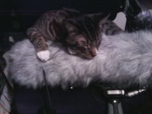 Live cat loves Dead cat-themonster.jpg