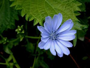 1154697655_1024x768_flower-wallpaper-ii-blue-flower.jpg