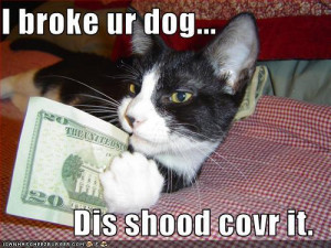 cute animal pictures with funny sayings,funny animals,