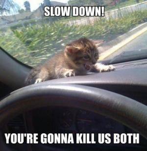 slow-down-scared-cat-car-meme