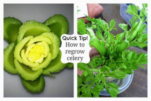 Heavenly Scents Recipes: How to grow celery from celery.