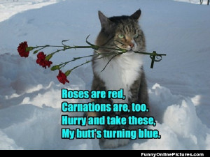 Funny cat picture with a cute little Valentine poem!
