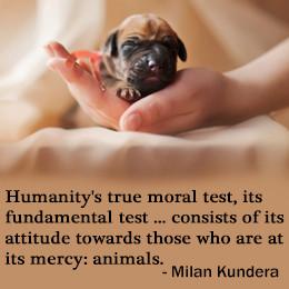 Milan Kundera on animal abuse