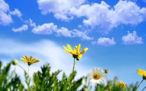 Nature Flowers Spring - HD Wallpaper