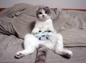 Funny cats photos, crazy cat photos