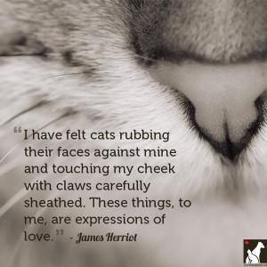 cat love quotes cat love quotes cat love quotes cat love quotes