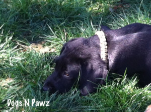 Deke–all worn out after playing!