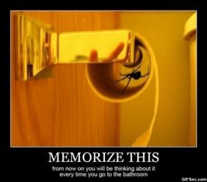 hate-spiders.jpg